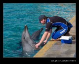 Dolphin #7