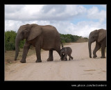 Elephants Crossing, Addo