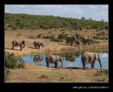Elephants Drink Time