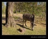 Zambezi Sun Hotel Zebra