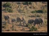 Elephants Heading for Water #2
