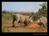 Warthog Disagreement #2