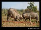 Warthog Disagreement #3
