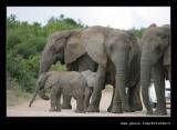 Elephants Road Crossing