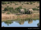 Elephants Watering Hole, Addo