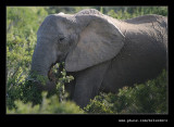 Elephant Lunchtime