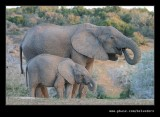 Elephants Drinking at Dusk #01