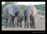 Elephants Drinking at Dusk #05