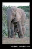 Elephants Drinking at Dusk #07