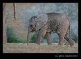 Elephants Drinking at Dusk #10