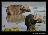 Buffalo Watering Hole #3, Addo