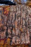 Not a Log, but Petrified Wood!