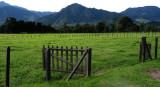 Green Pasturelands in Volcan