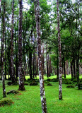 Forest in El Valle