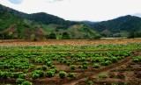 Highland Organic Farming