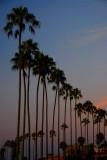 La Jolla Cove Series - Our Beautiful Palms