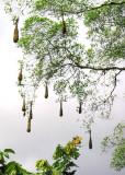 Unusual Nests