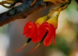 Delicate Blooms in the Australian Gardens