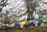 From Paro to Punakha