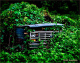 Jungle Ford Truck