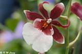 Orchid DSC_3405