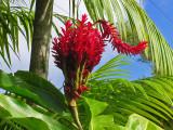 Martinique Gardens Jardin