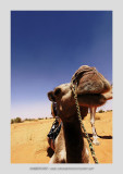 Mauritania 49