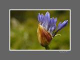 Floral 49