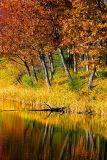 Beside Jones Creek 8783