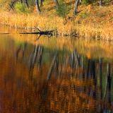 Jones Creek Reflections 8782