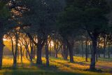 Oak Forest At Sunrise 20061116