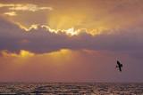 Mustang Island Sunrise 20061127