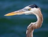 Heron Head 44926