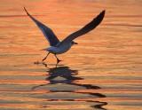 Seagull On The Run 45097