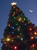Christmas Tree 20061217