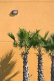 Three Palms 47239