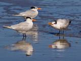 Taking A Bad Tern 20061226