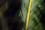 Palm Frond 20070104