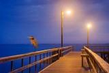 Heron On A Pier 50176