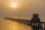 Foggy Sunrise 52926