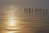 Foggy Sunrise 52989
