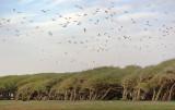 156 Herons 20070225