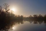 Louisiana Bayou 55487