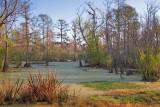 Louisiana Swamp 55496
