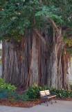 One Big Tree 20070312