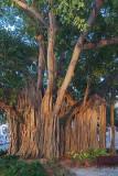 One Big Tree 56546