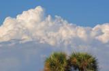 Clouds & Palms 56541