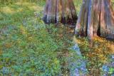 Swamp Scene 56960