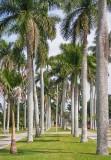 Royal Palm Avenue 57159