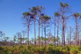 Estero Bay Scrub Preserve 57620